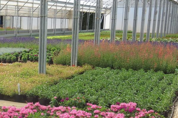 floral ornamental coir pro