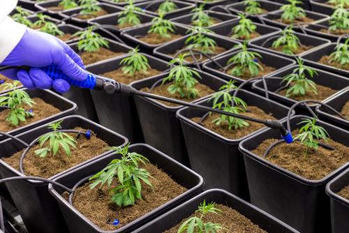 grid medicinal cannabis coir pro