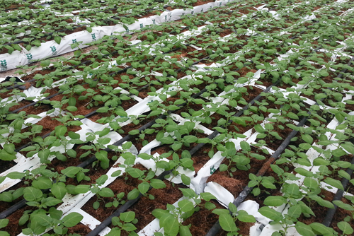 vegetable growers coir pro