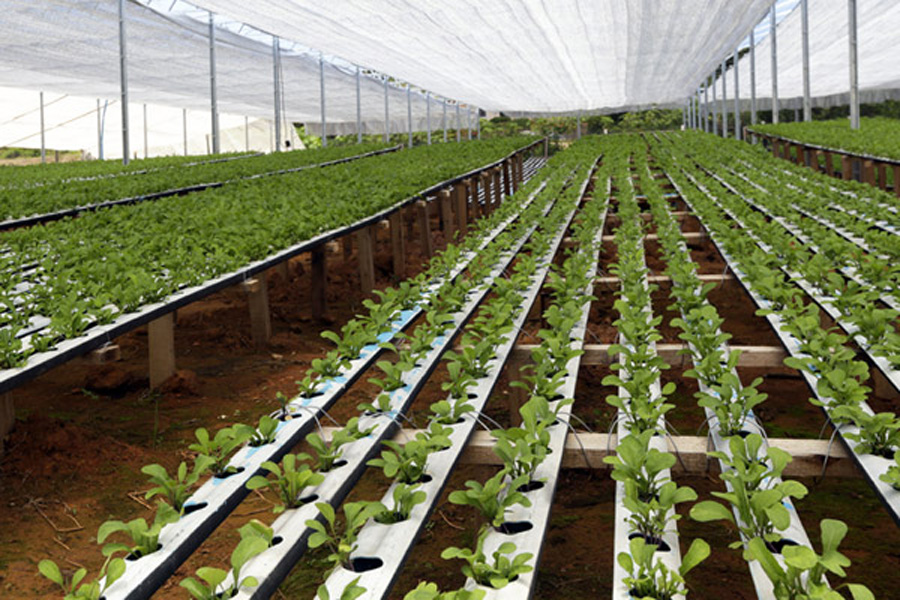 horticultural coir ltd vegetable growers