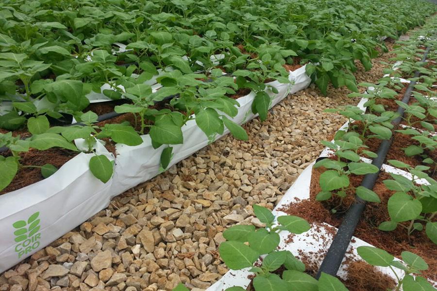 horticultural coir ltd