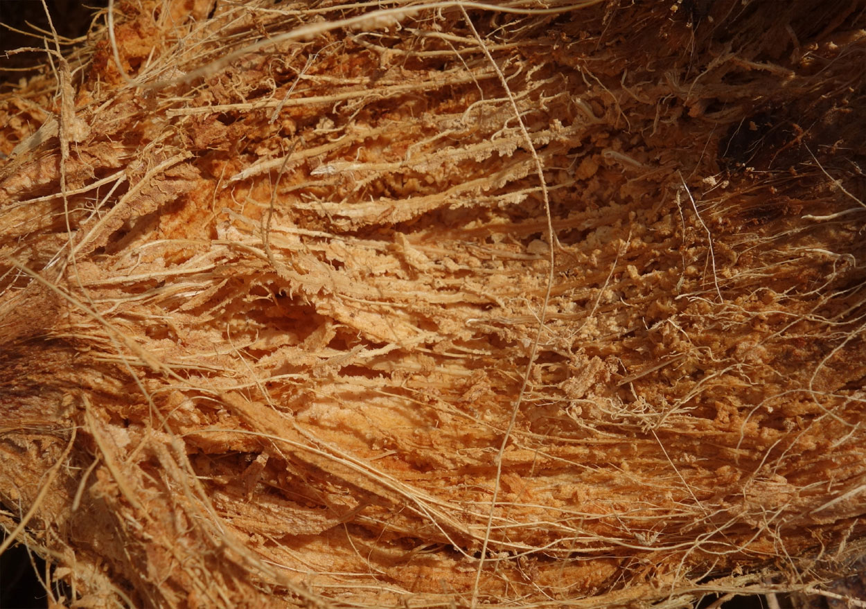 what is coir after
