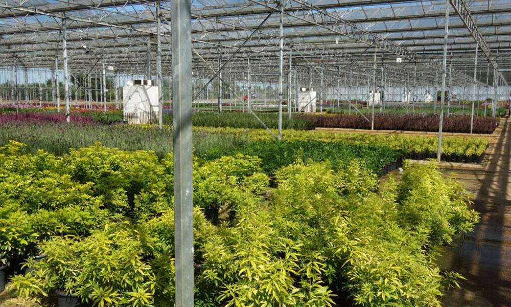 coir pro horticultural coir ltd